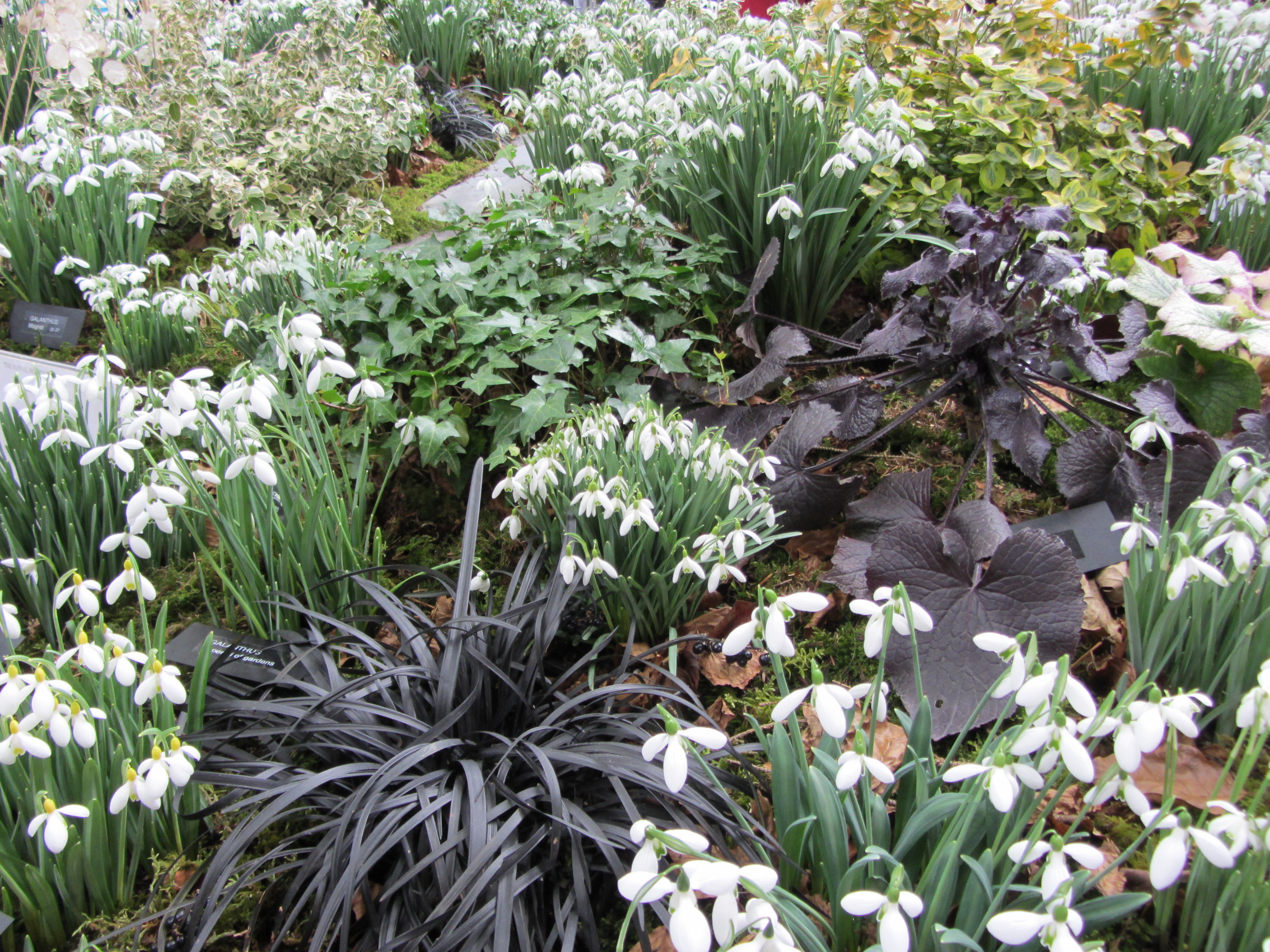 late winter and early spring bulbs for your garden