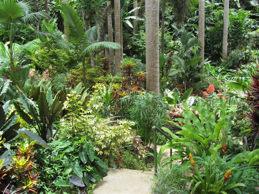 view Totally tropical garden style